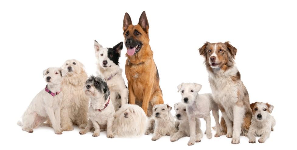 Comederos Taurus, los mejores productos para tus mascotas